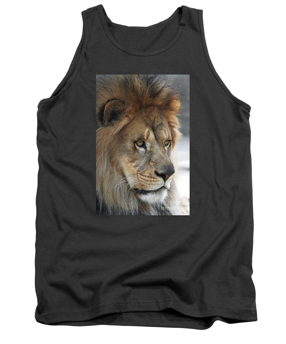 Lion Tank Top featuring the photograph African Lion #8 by Judy Whitton