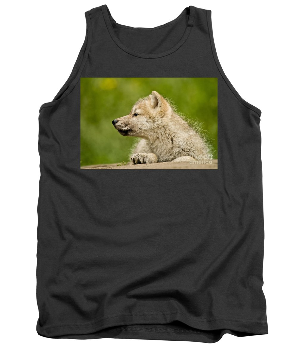 Arctic Wolf Tank Top featuring the photograph Arctic Wolf Pictures 340 by Wolves Only