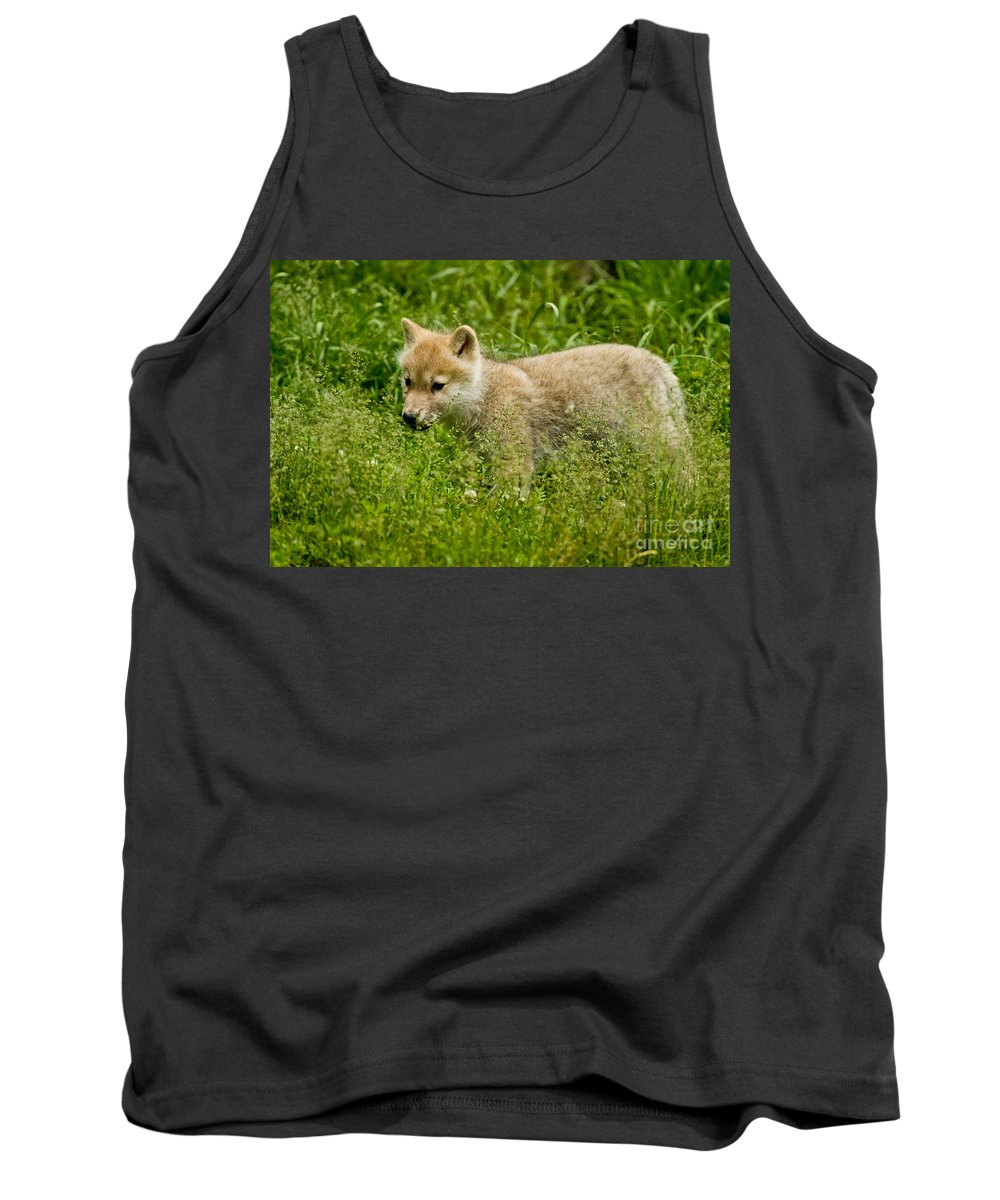 Arctic Wolf Tank Top featuring the photograph Arctic Wolf Pictures 341 by Wolves Only