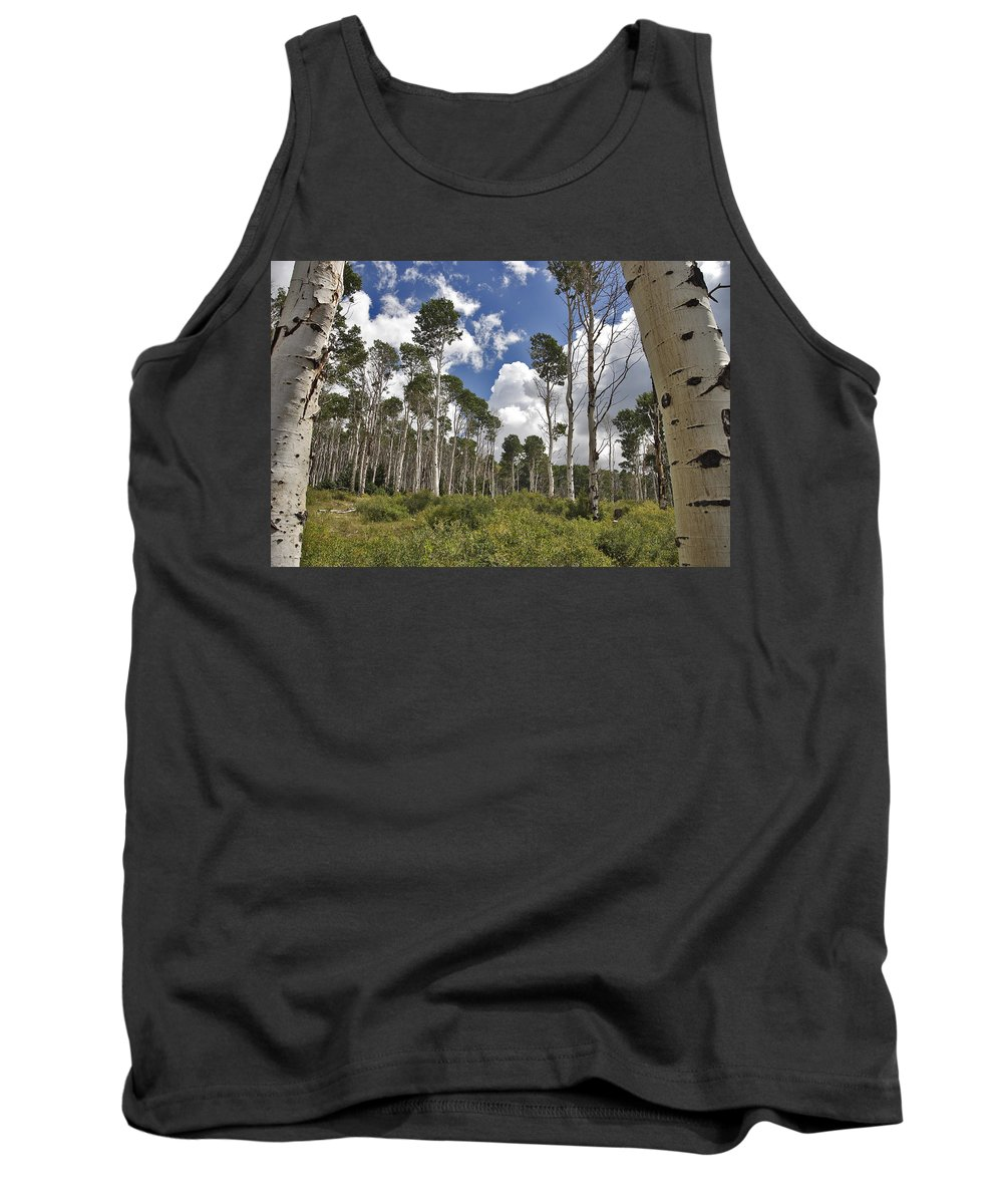3scape Tank Top featuring the photograph Aspen Grove by Adam Romanowicz