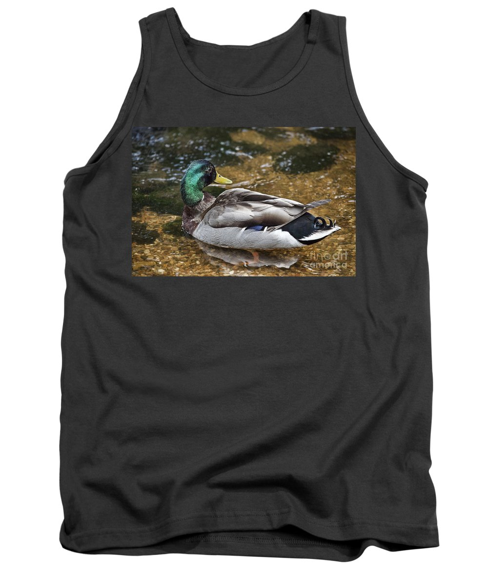 Duck. Ducks Tank Top featuring the photograph At The Duck Pond V5 by Douglas Barnard