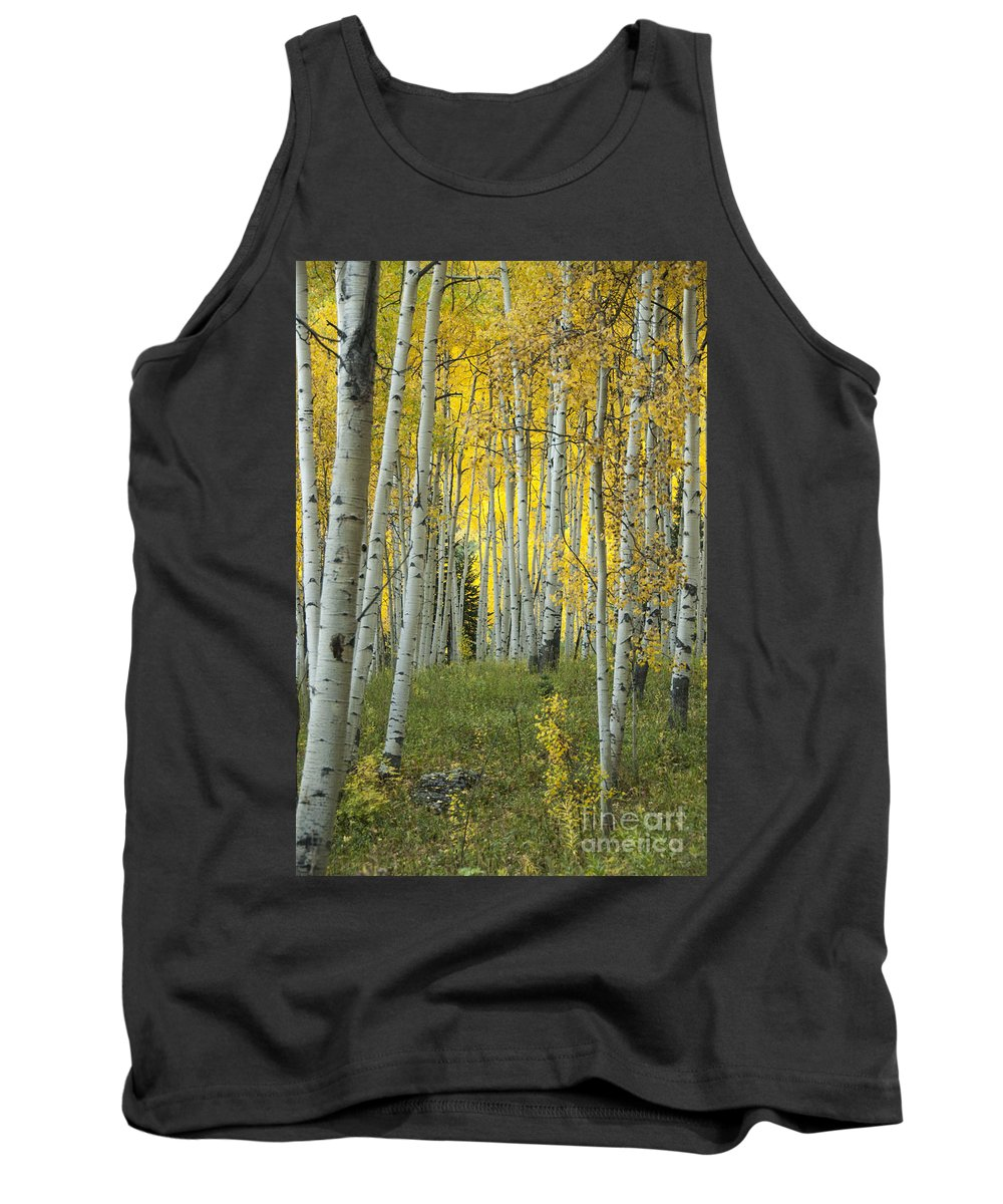 Alpine Tank Top featuring the photograph Autumn In The Aspen Grove by Juli Scalzi