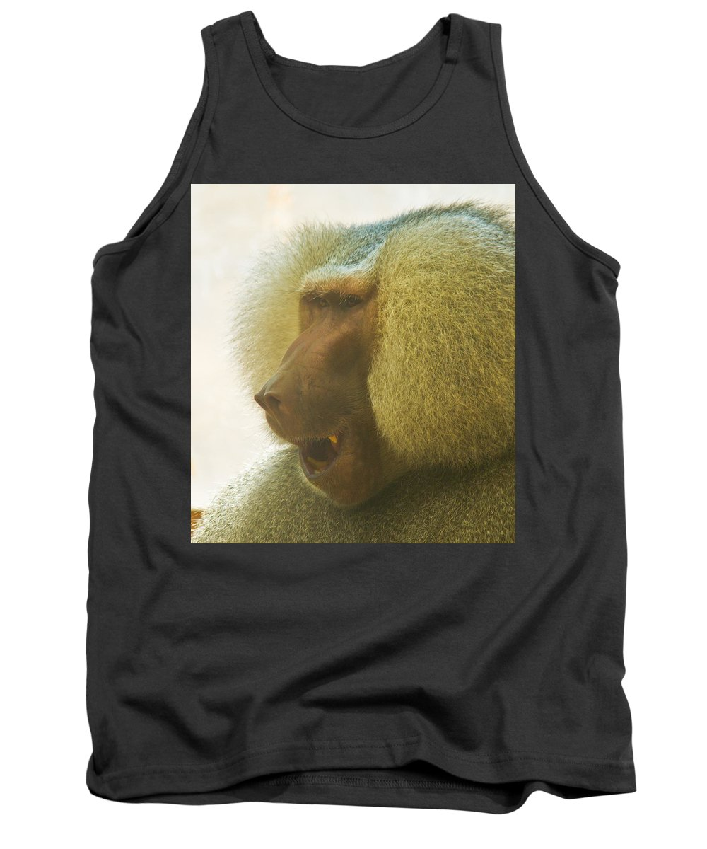 Baboon Tank Top featuring the photograph Baboon In The Sun by Jonny D