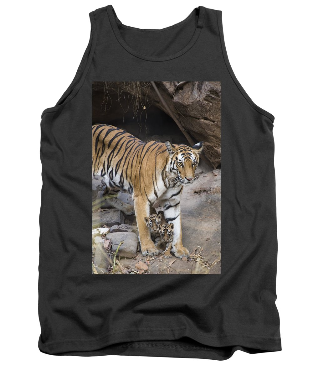Feb0514 Tank Top featuring the photograph Bengal Tiger And Cubs Bandhavgarh Np by Suzi Eszterhas