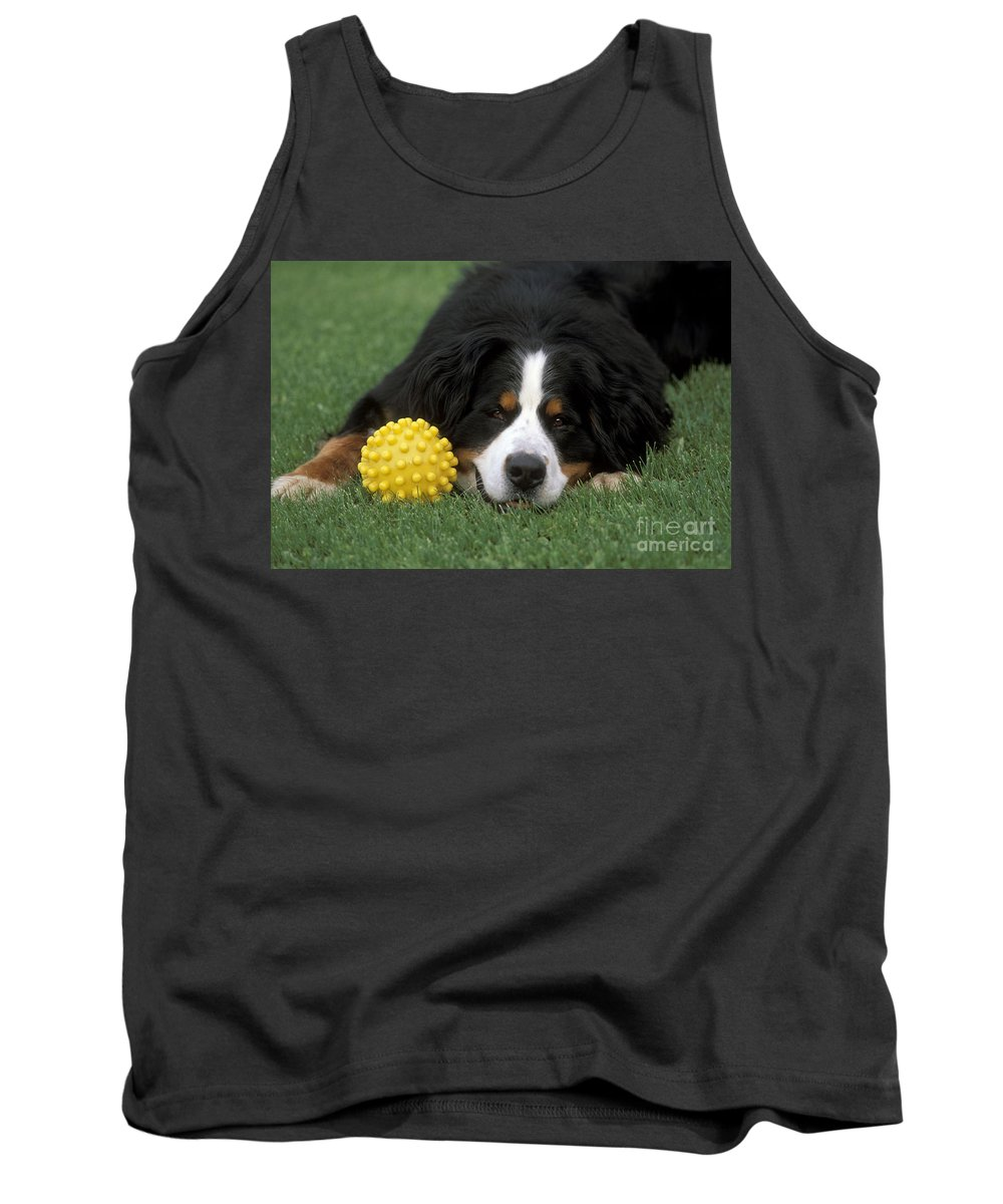Bernese Mountain Dog Tank Top featuring the photograph Bernese Mountain Dog by Rolf Kopfle