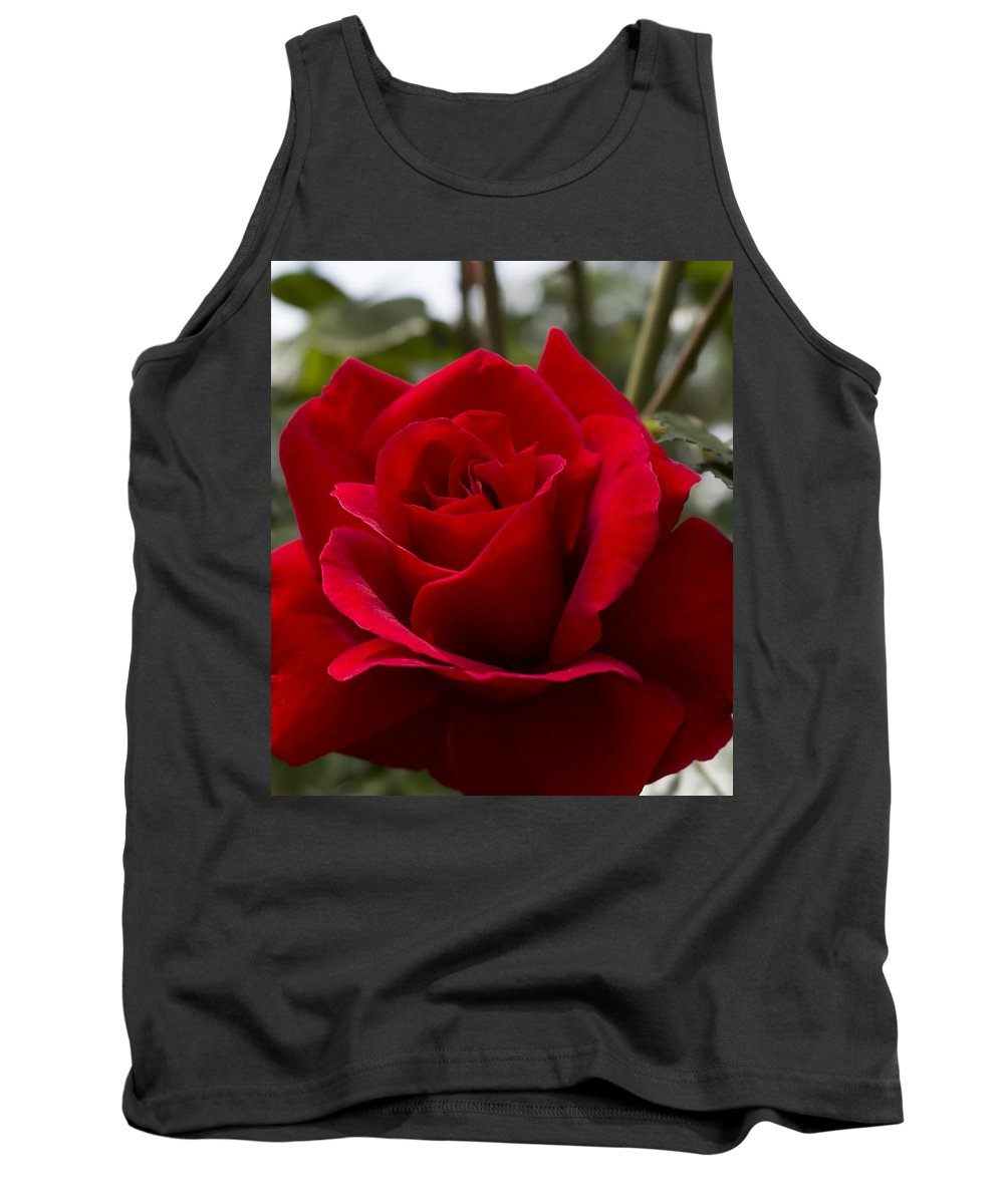 Romance Tank Top featuring the photograph Big Red Rose by Velizar Gordeev