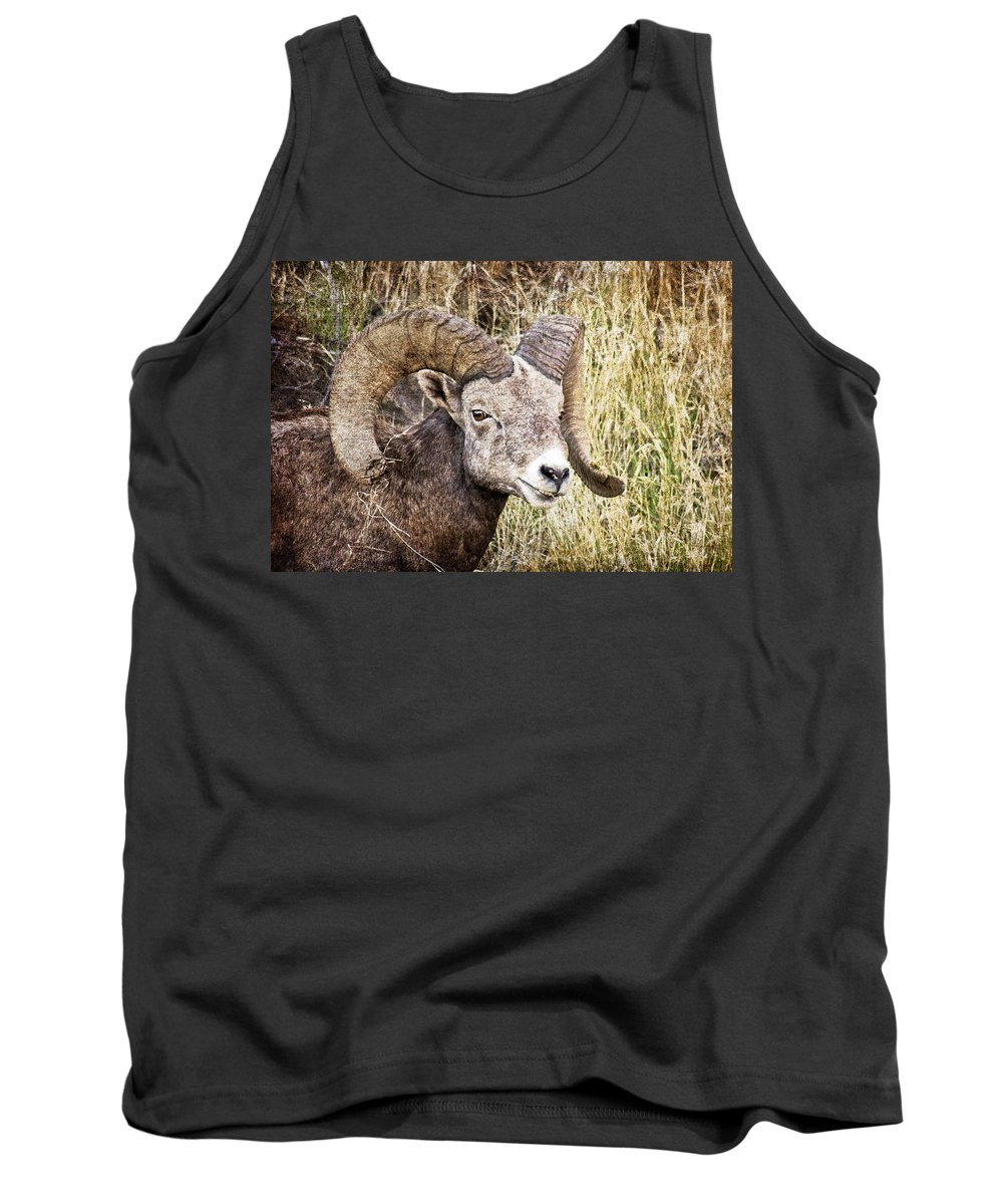 Bighorn Sheep Tank Top featuring the photograph Bighorn Sheep In Field by Athena Mckinzie
