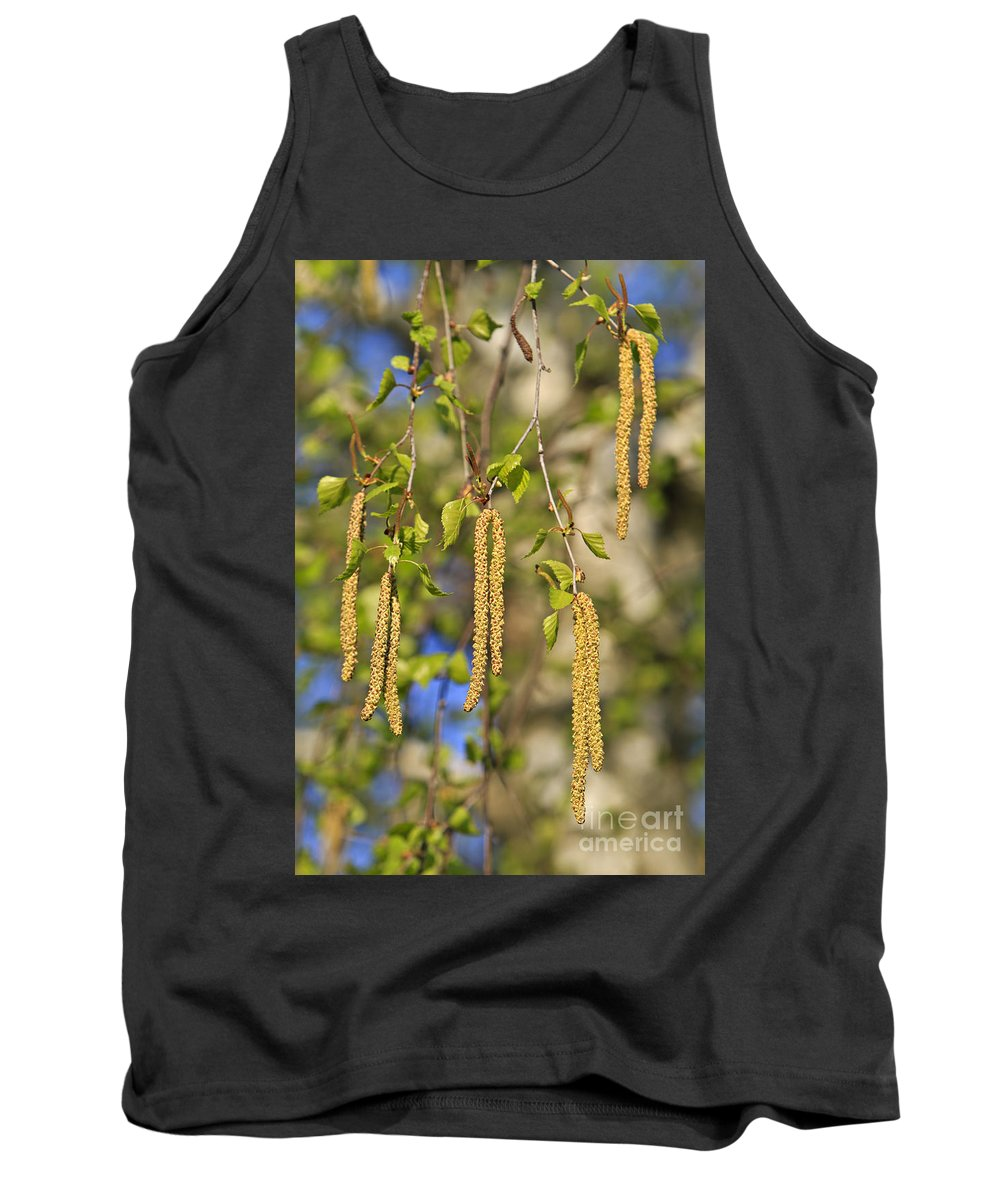 Birch Tank Top featuring the photograph Birch by Dan Radi