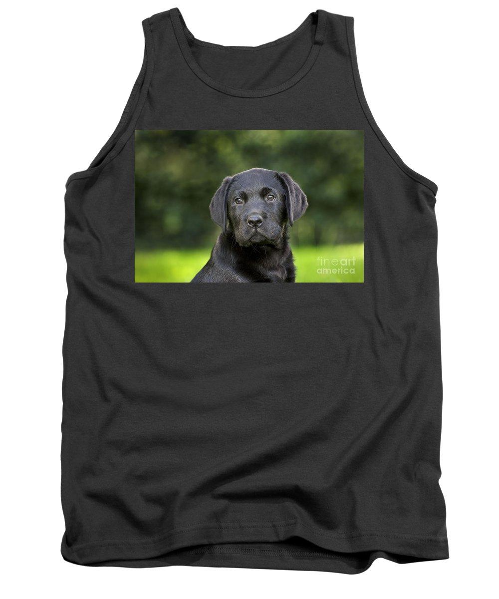 Labrador Retriever Tank Top featuring the photograph Black Labrador Puppy by Johan De Meester