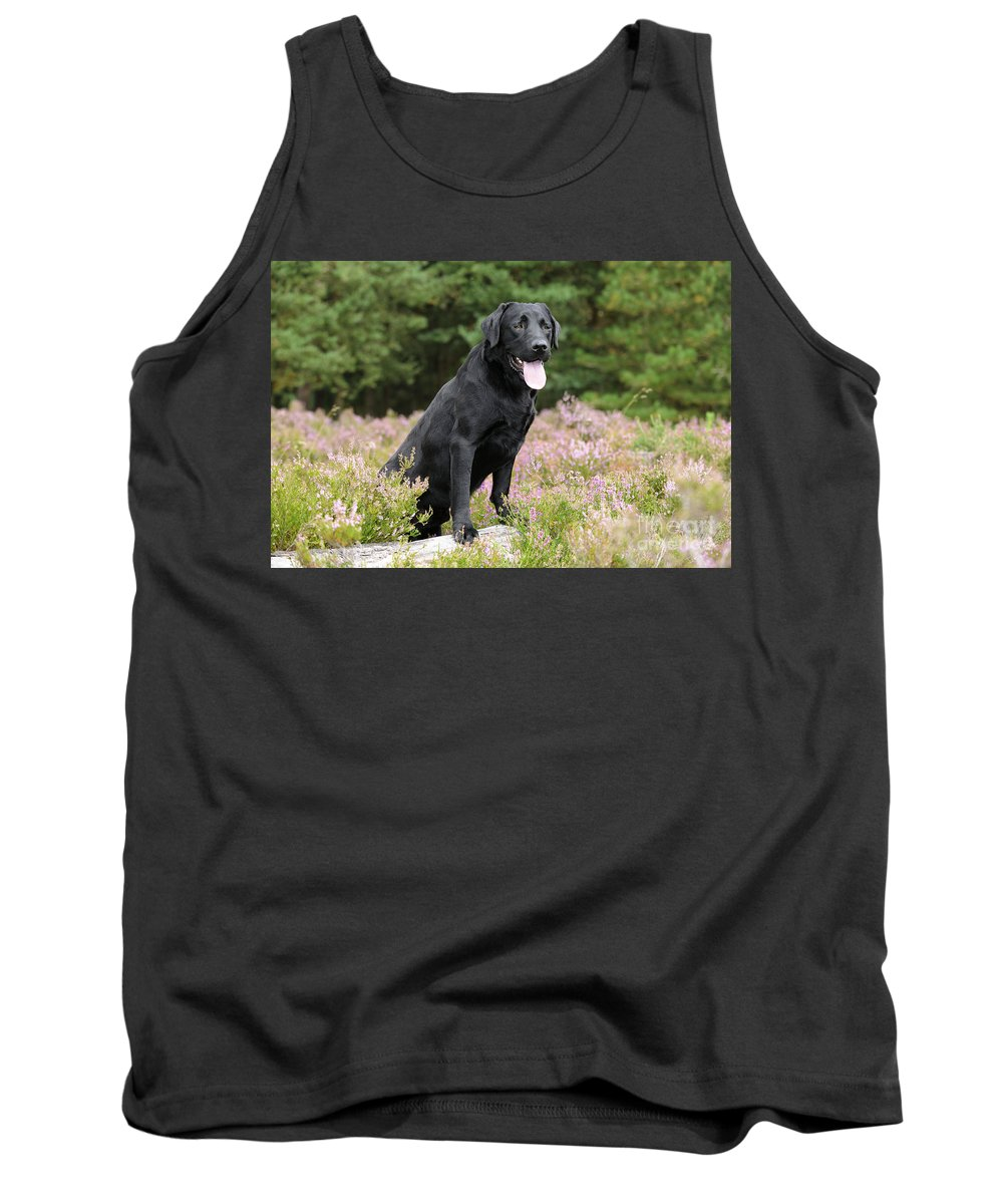 Labrador Retriever Tank Top featuring the photograph Black Labrador Retriever by John Daniels