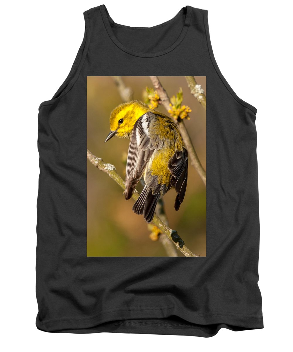 Bird Tank Top featuring the photograph Black-throated Green Warbler by Richard Kitchen