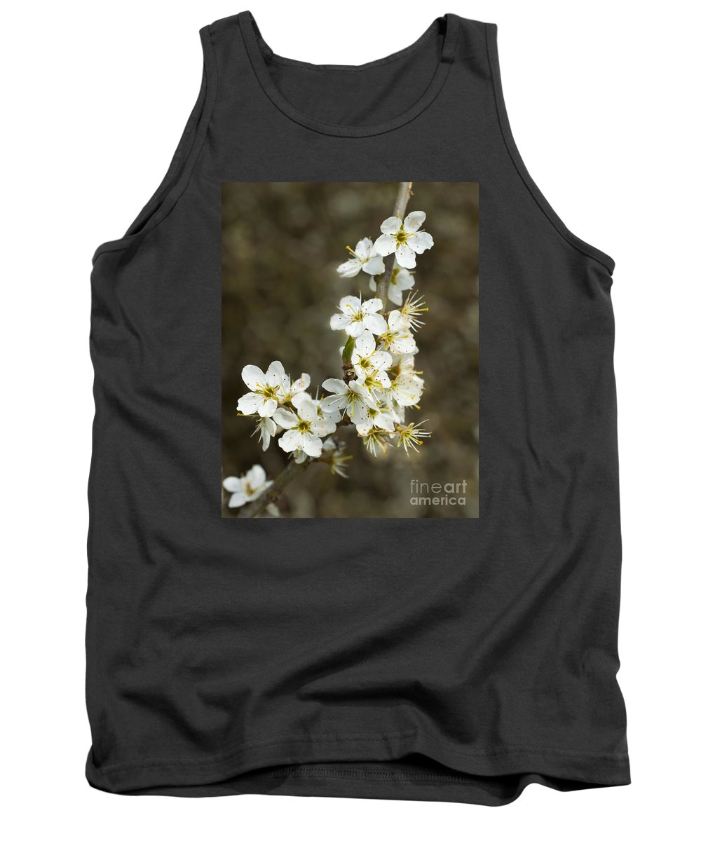Blackthorn Tank Top featuring the photograph Blackthorn Or Sloe Blossom Prunus Spinosa by Liz Leyden