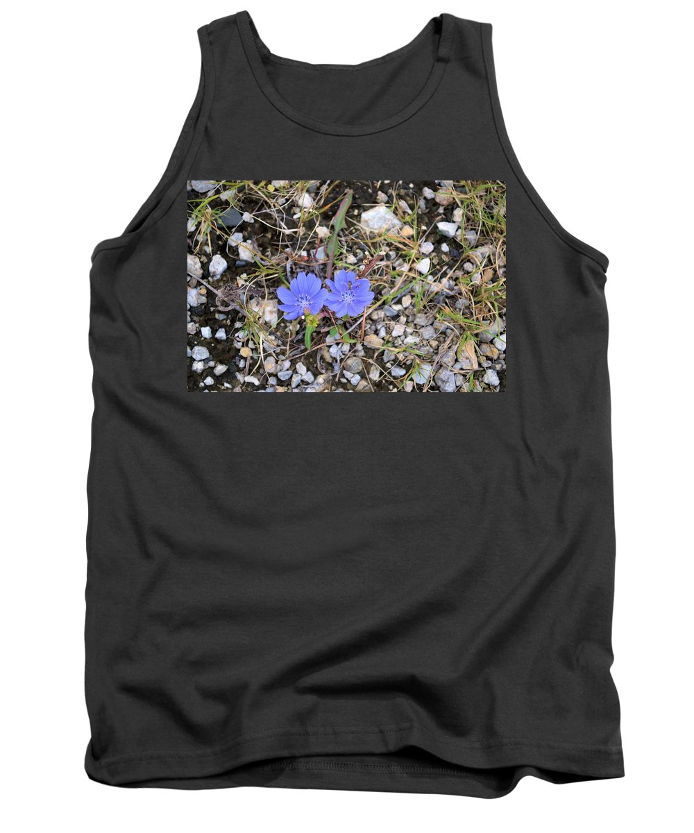 Chicory Tank Top featuring the photograph Blue Daisy by Bonfire Photography