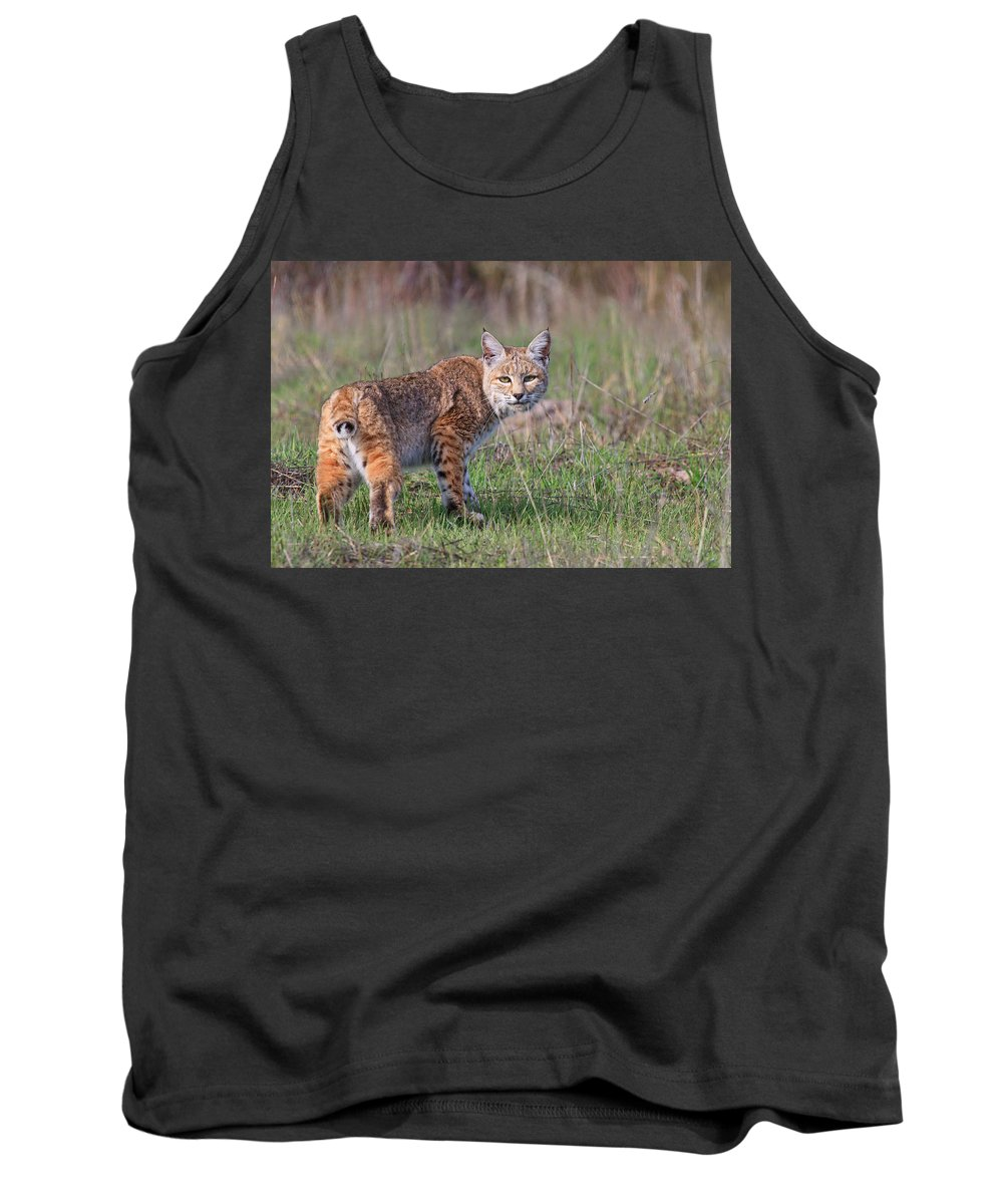 Bobcat Tank Top featuring the photograph Bobcat Glance by Beth Sargent