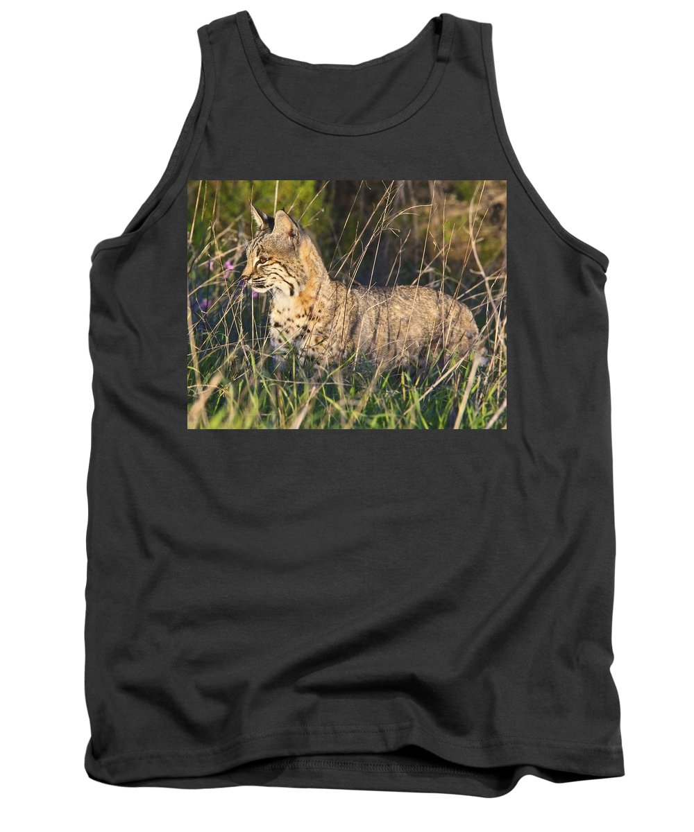 Bobcat Tank Top featuring the photograph Bobcat In The Grass by Beth Sargent