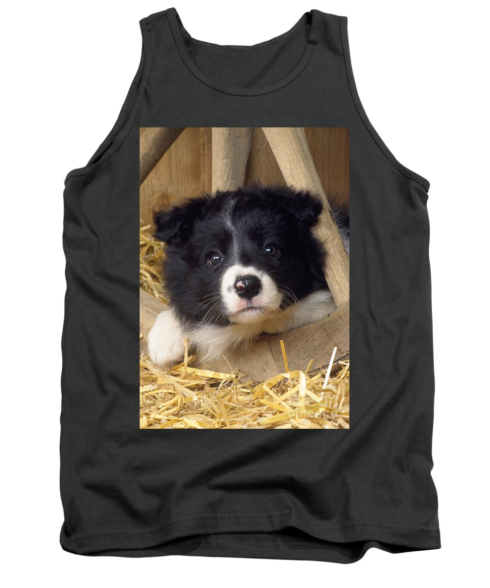Border Collie Tank Top featuring the photograph Border Collie Puppy And Wooden Wheel by John Daniels