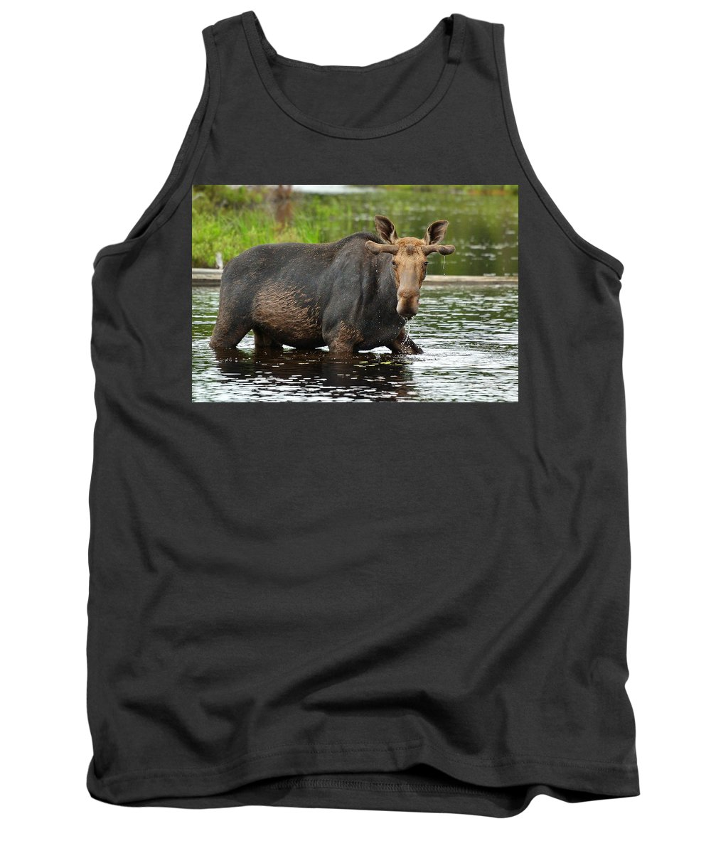 Alces Alces Tank Top featuring the photograph Boreal King by Joshua McCullough