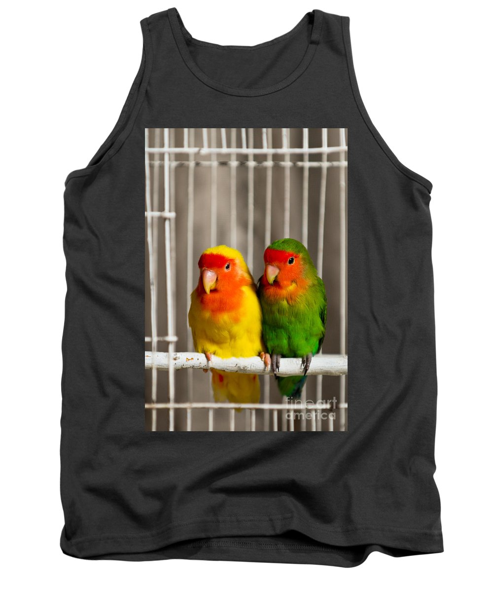 Birds Tank Top featuring the photograph Born To Be Free by Syed Aqueel