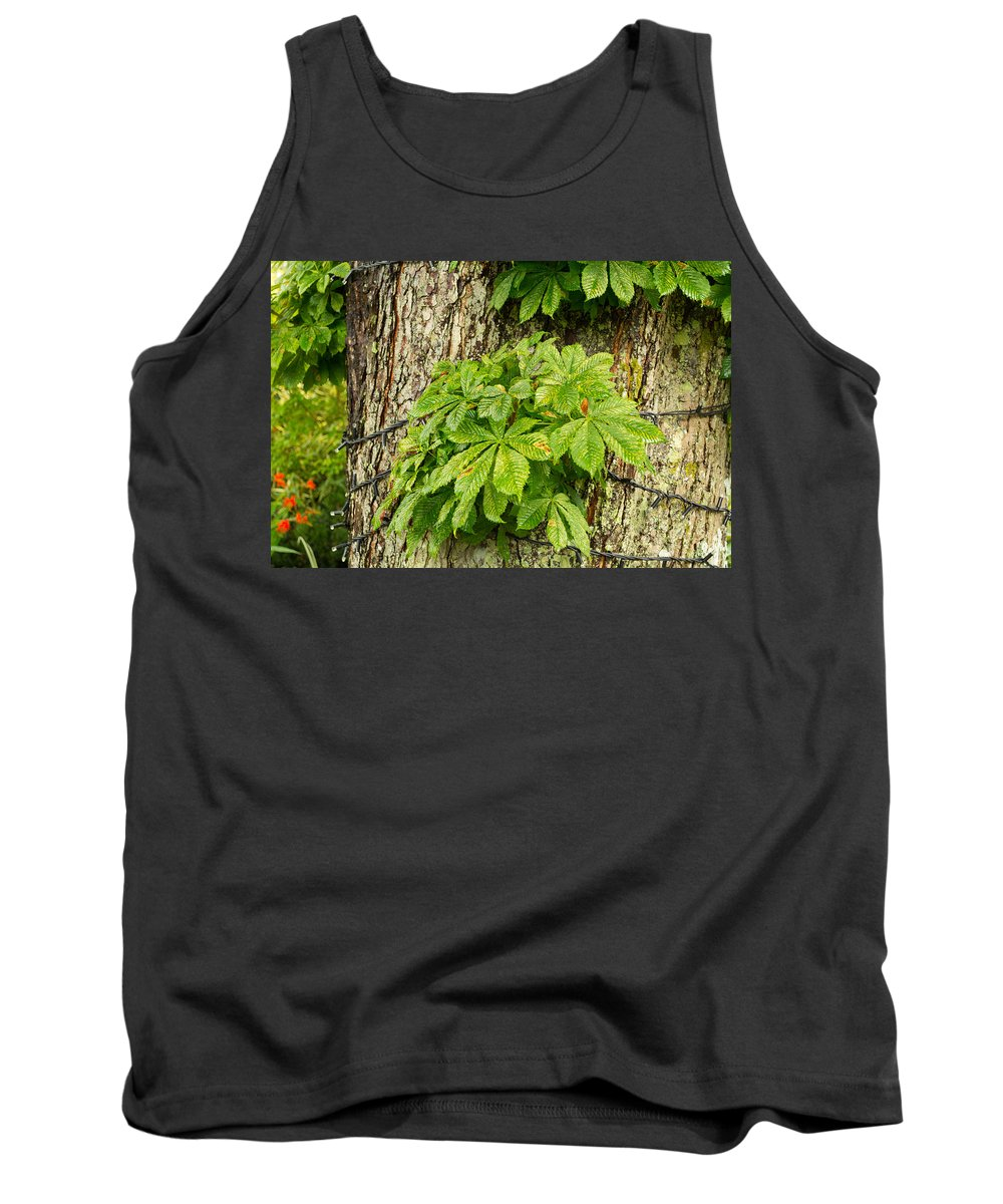 Leaf Tank Top featuring the photograph Braided Trunk by Mair Hunt