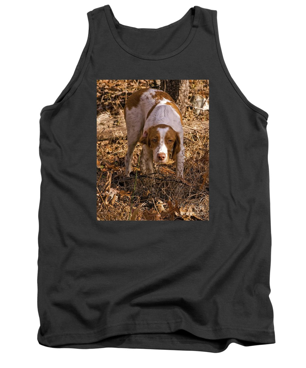 Dog Tank Top featuring the photograph Brittany Spaniel Pixel's Pointed Woodcock by Timothy Flanigan