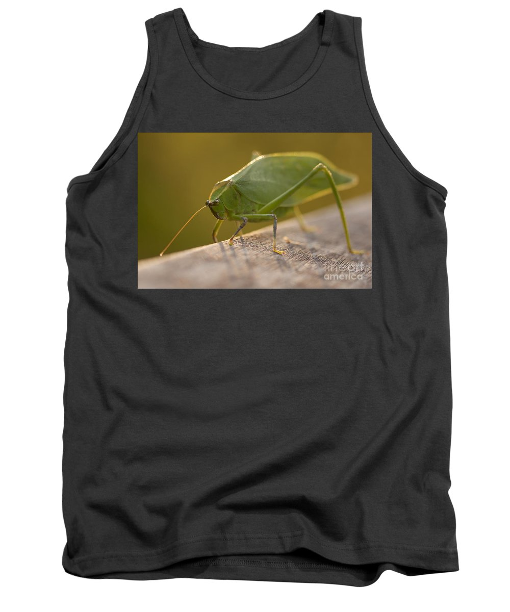 Broad-winged Katydid Tank Top featuring the photograph Broad-winged Katydid by Meg Rousher