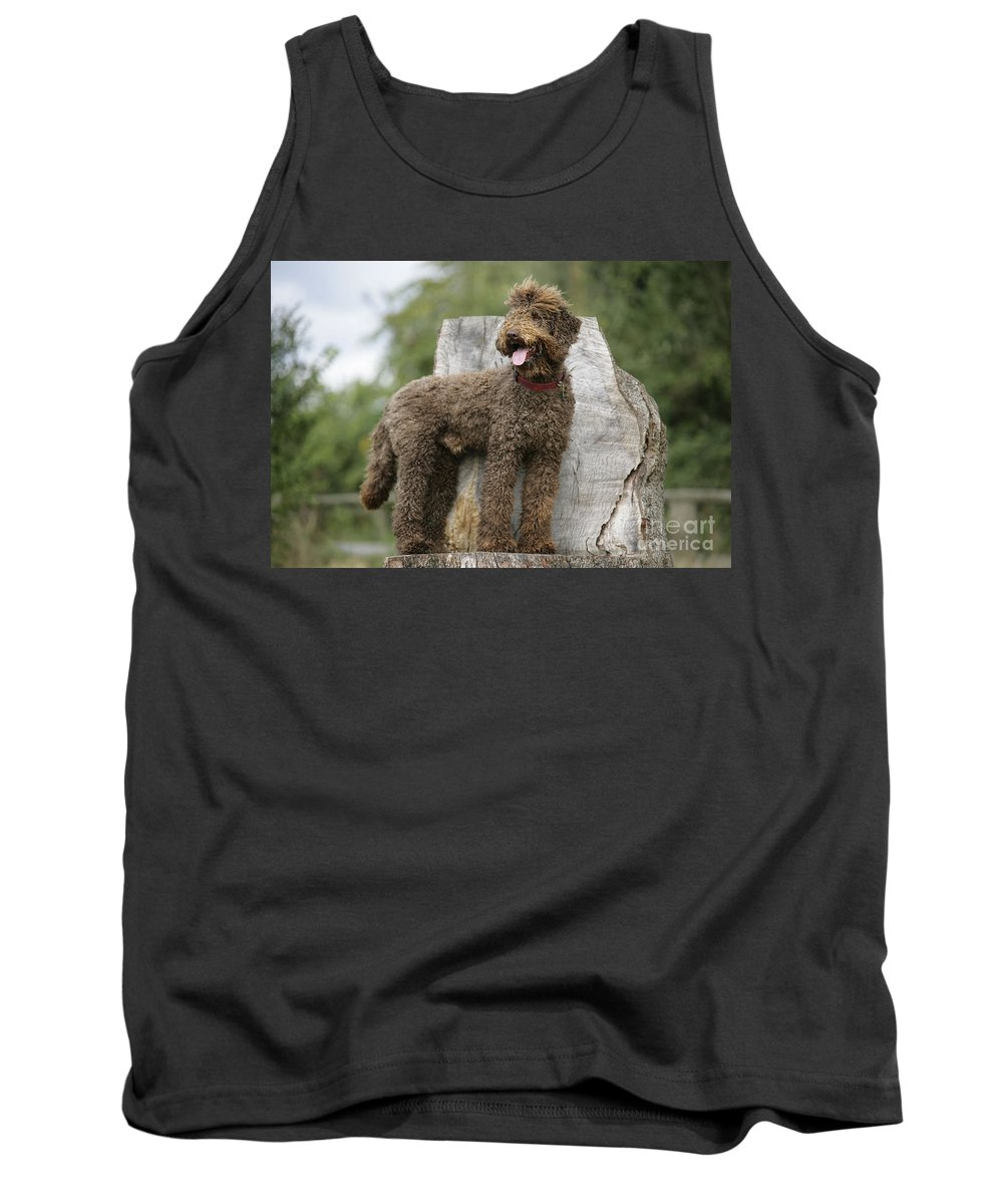 Labradoodle Tank Top featuring the photograph Brown Labradoodle Standing On Tree Stump by John Daniels