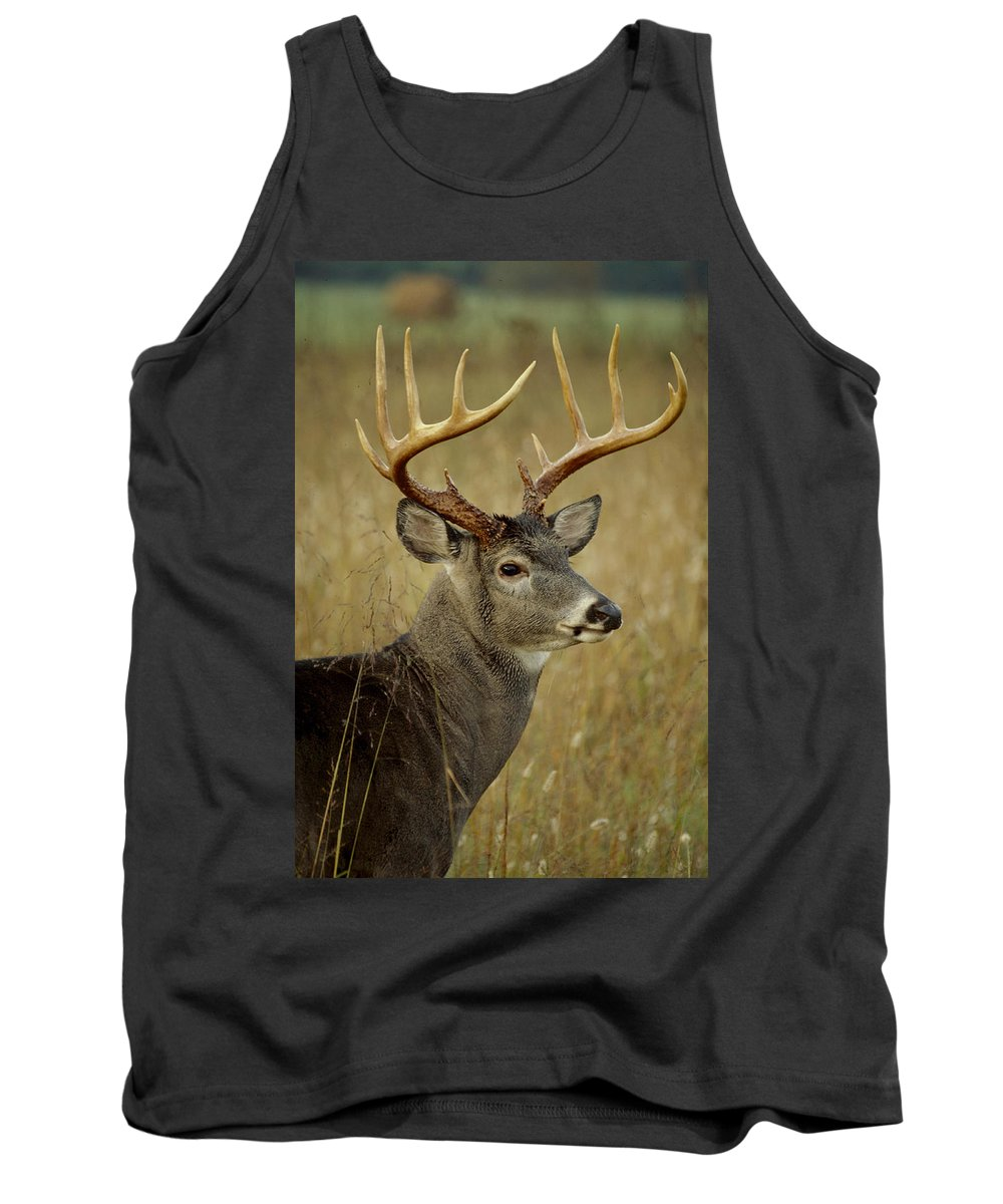 Deer Tank Top featuring the photograph Buck by Eric Albright