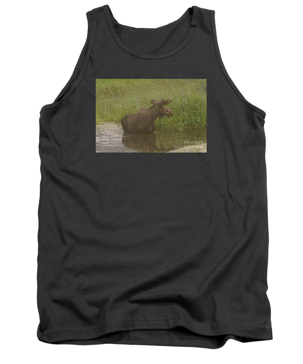 Wildlife Tank Top featuring the photograph Bull Moose Looking Around by Jeff Swan
