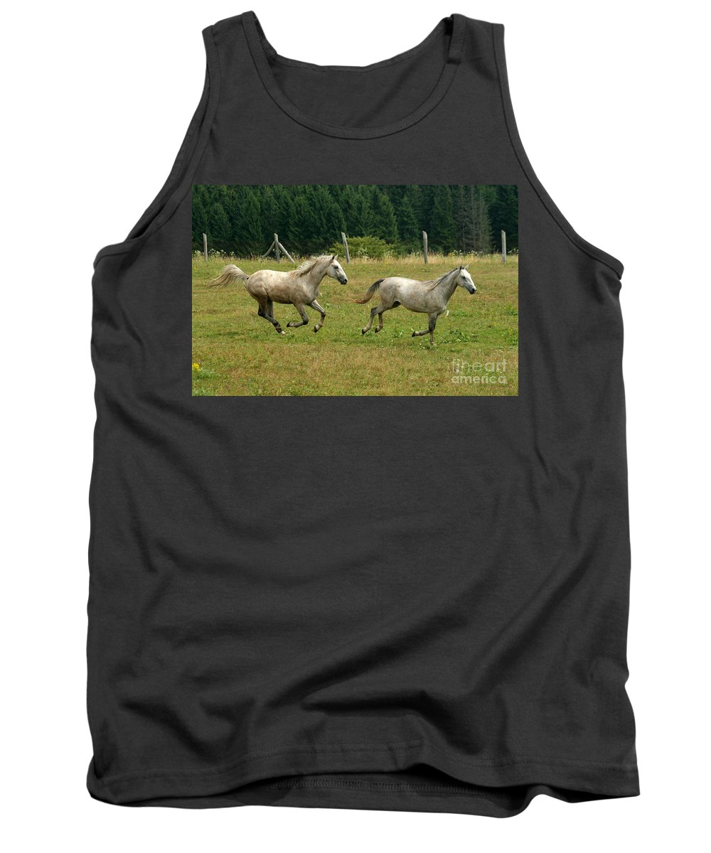 Grey Horse Tank Top featuring the photograph Catch Me If You Can by Angel Ciesniarska
