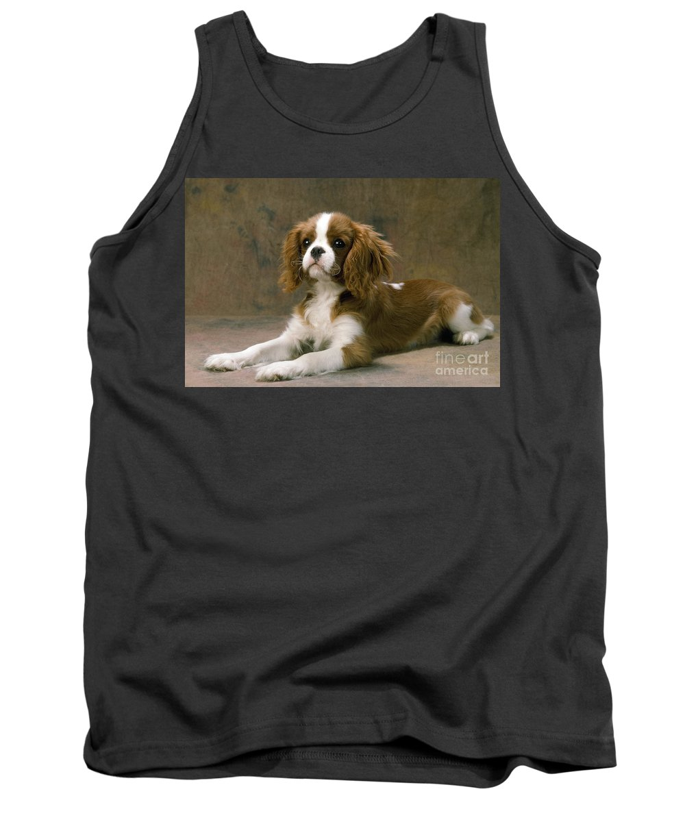 Cavalier King Charles Tank Top featuring the photograph Cavalier King Charles Spaniel Dog Lying by John Daniels