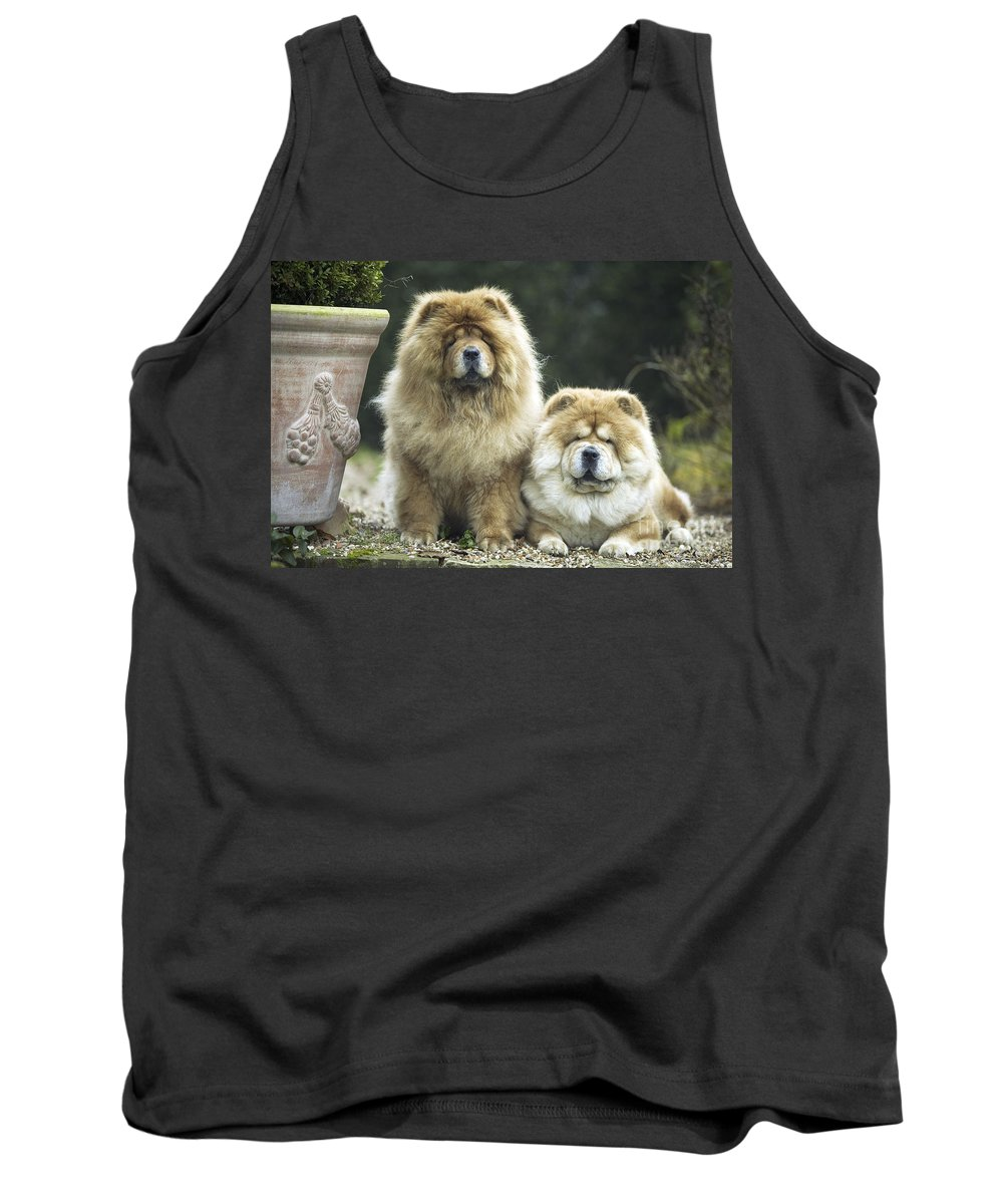Chow-chow Tank Top featuring the photograph Chow Chow Dogs by Jean-Michel Labat