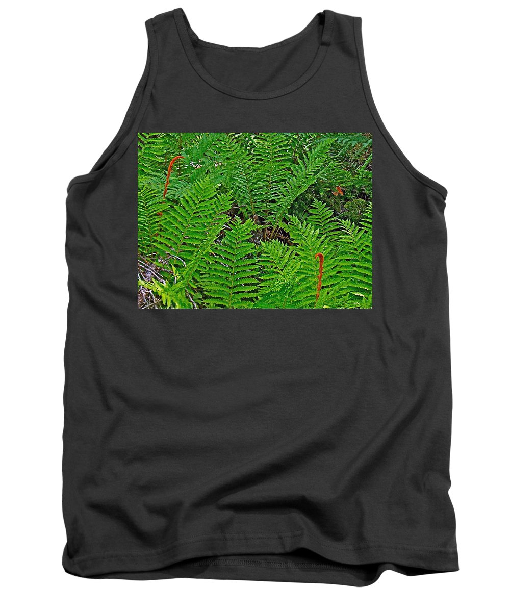 Cinnamon Ferns Along Skyline Trail In Cape Breton Highlands Np Tank Top featuring the photograph Cinnamon Ferns Along Skyline Trail In Cape Breton Highlands Np-n by Ruth Hager