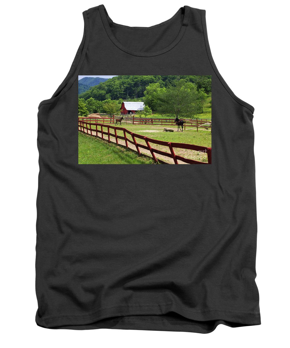 Paso Tank Top featuring the photograph Colts On A Farm by Jill Lang