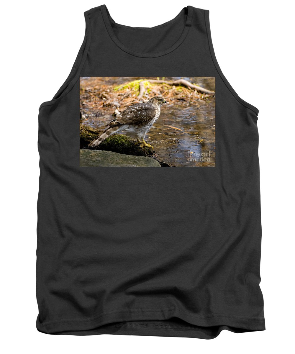 Cooper's Hawk Tank Top featuring the photograph Coopers Hawk Pictures 61 by World Wildlife Photography