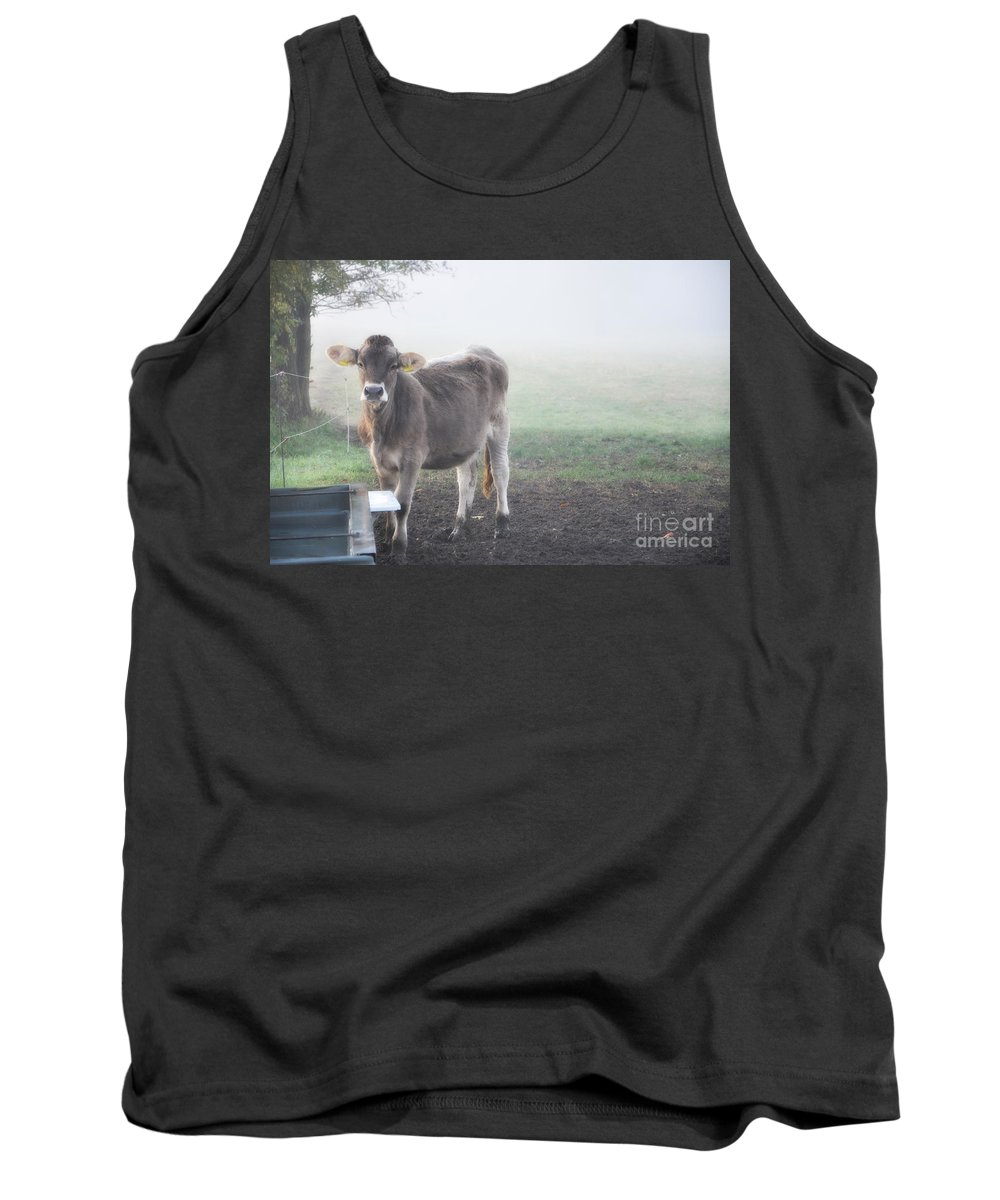 Cows Tank Top featuring the photograph Cow In The Fog by Mats Silvan