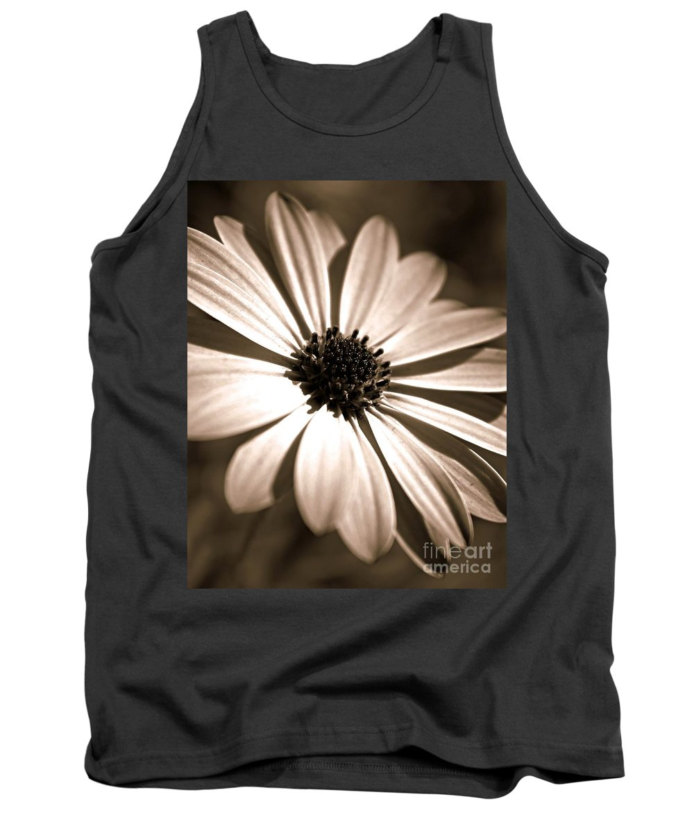 Osteospermum Tank Top featuring the photograph Daisy Shimmer by Clare Bevan