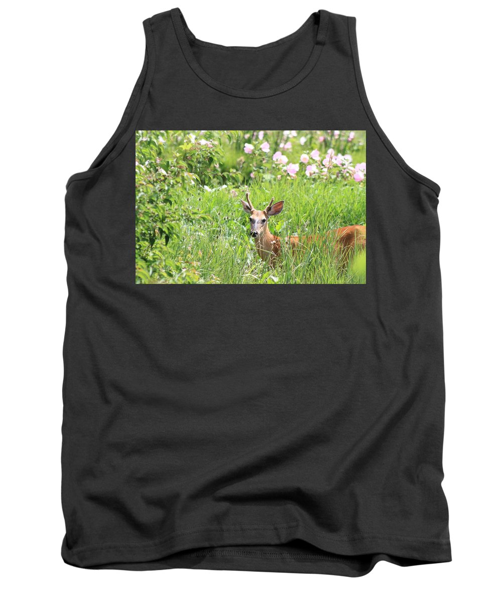 Deer In Magee Marsh Tank Top featuring the photograph Deer In Magee Marsh by Dan Sproul
