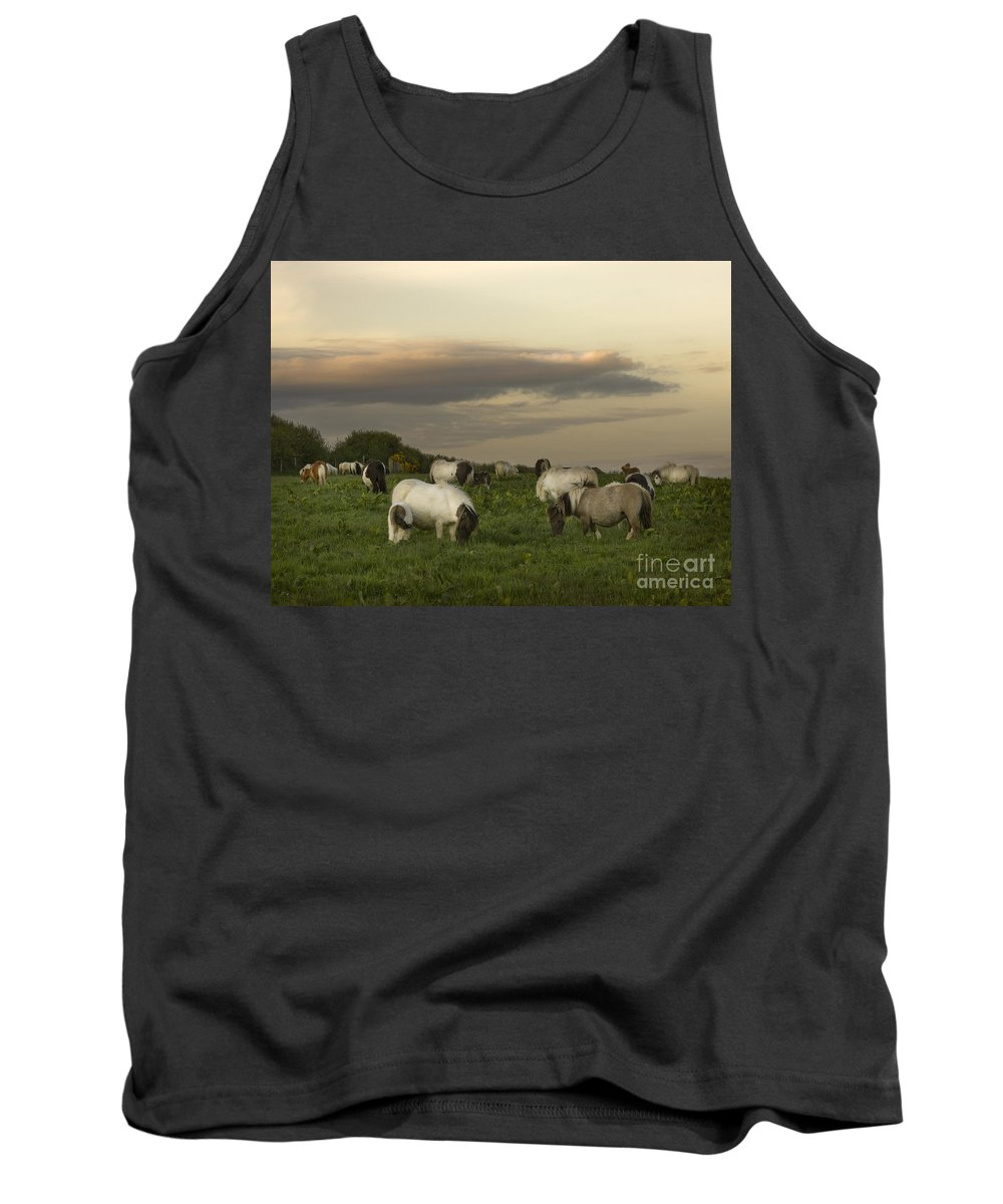 Ponies Tank Top featuring the photograph Dining Ponies by Angel Ciesniarska