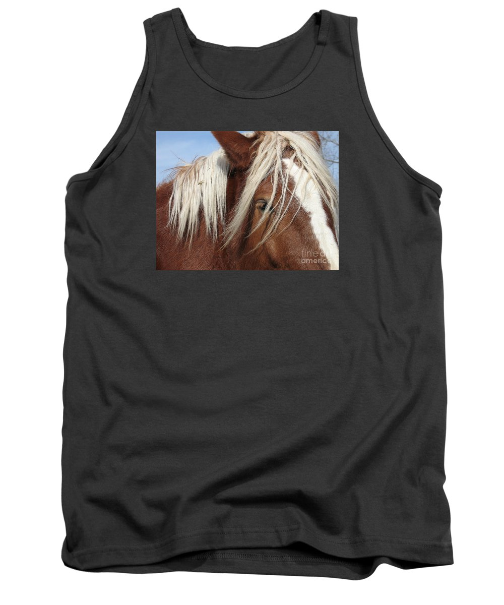 Horse Tank Top featuring the photograph Disheveled by Ann Horn