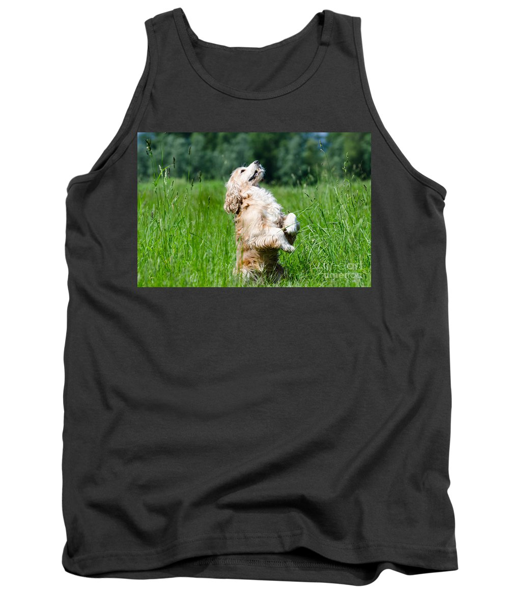 Dog Tank Top featuring the photograph Dog Sitting Up by Mats Silvan