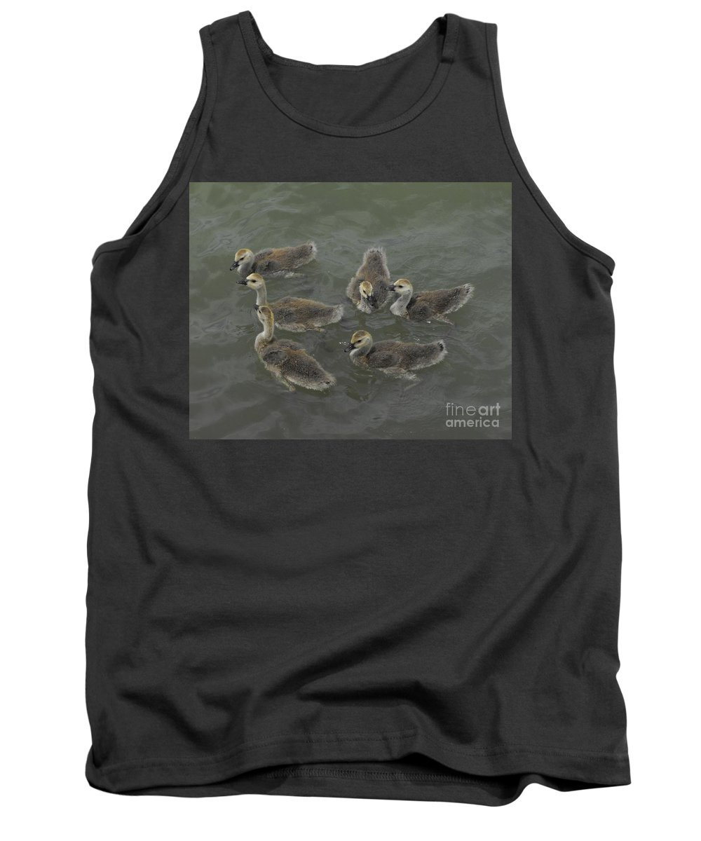 Ducks Tank Top featuring the photograph Ducklings by Brandi Maher