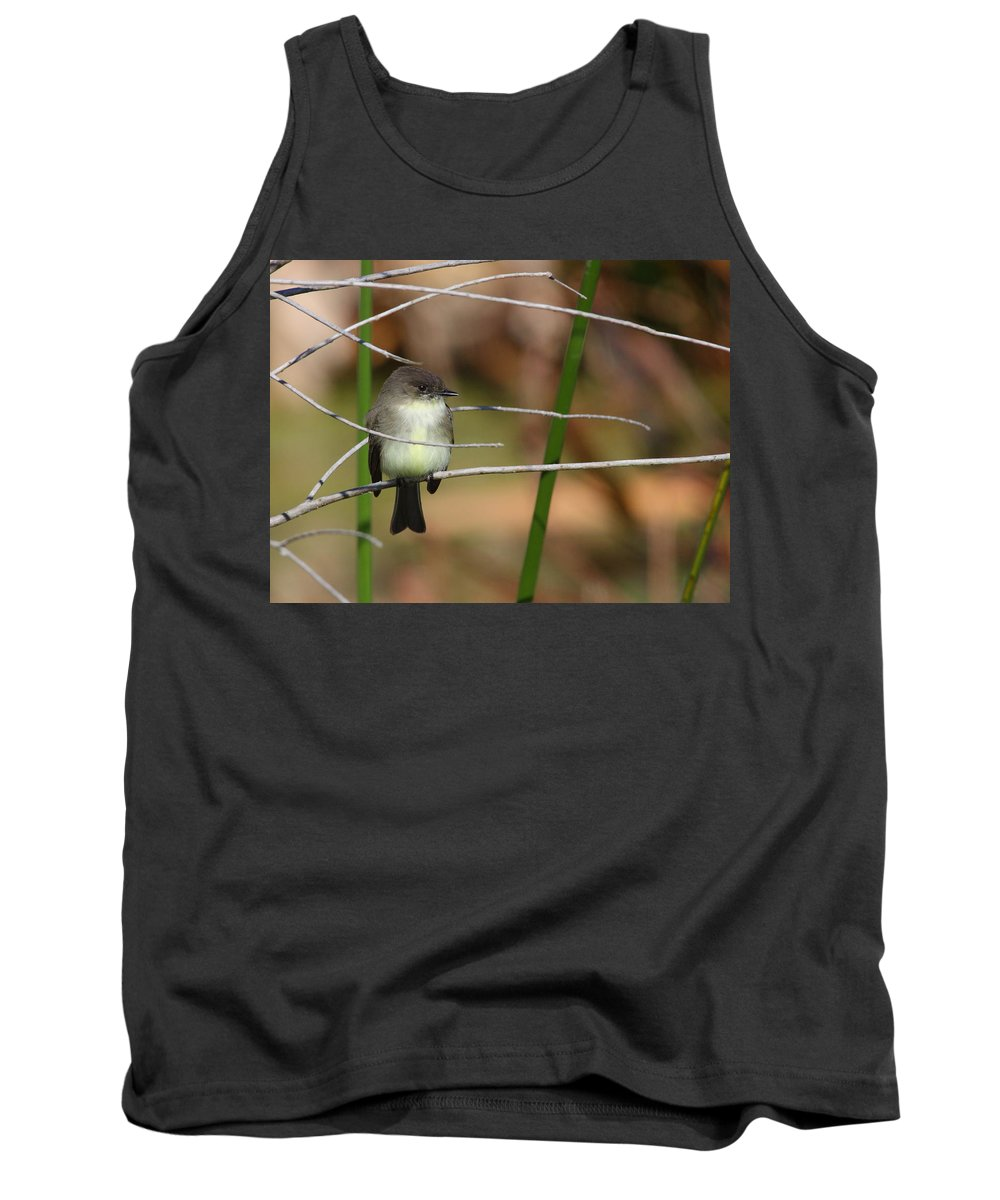 Phoebe Tank Top featuring the photograph Eastern Phoebe by Bruce J Robinson