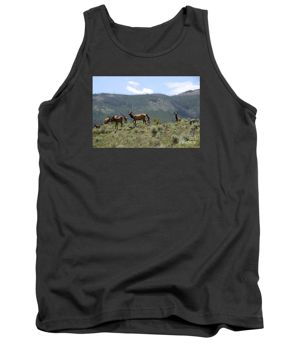 Elk Cow Tank Top featuring the photograph Elk Family by Christiane Schulze Art And Photography