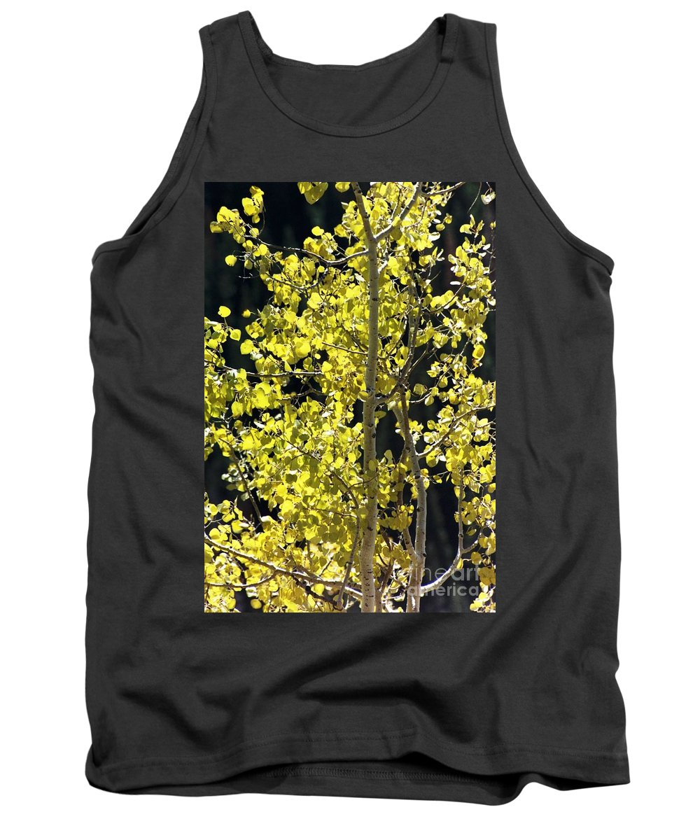 Aspens Tank Top featuring the photograph Fall by Brandi Maher