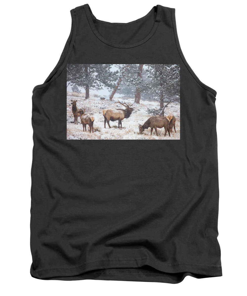 Elk Tank Top featuring the photograph Family Man by Darren White