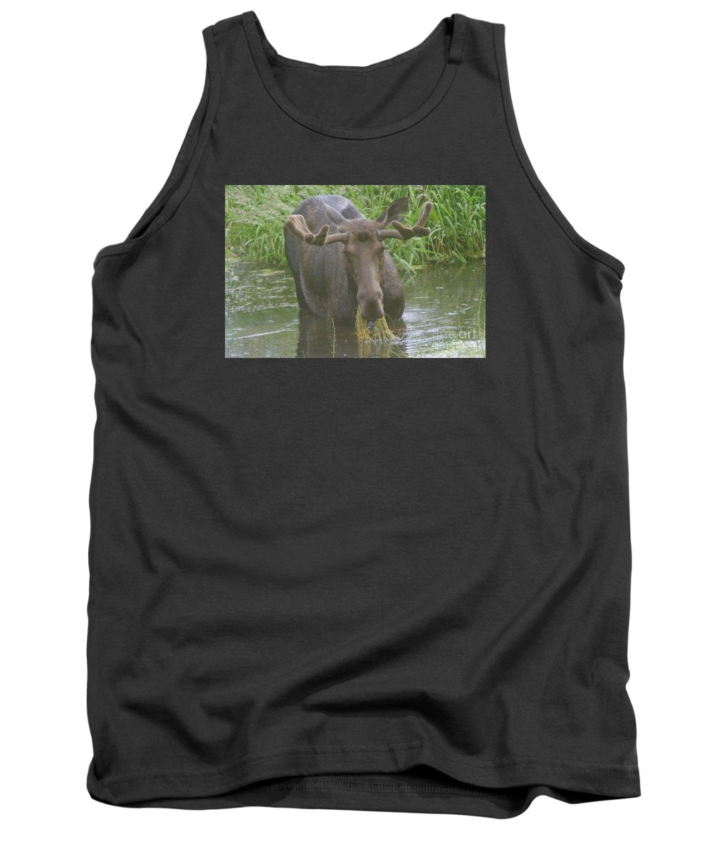 Wildlife Tank Top featuring the photograph Feasting by Jeff Swan