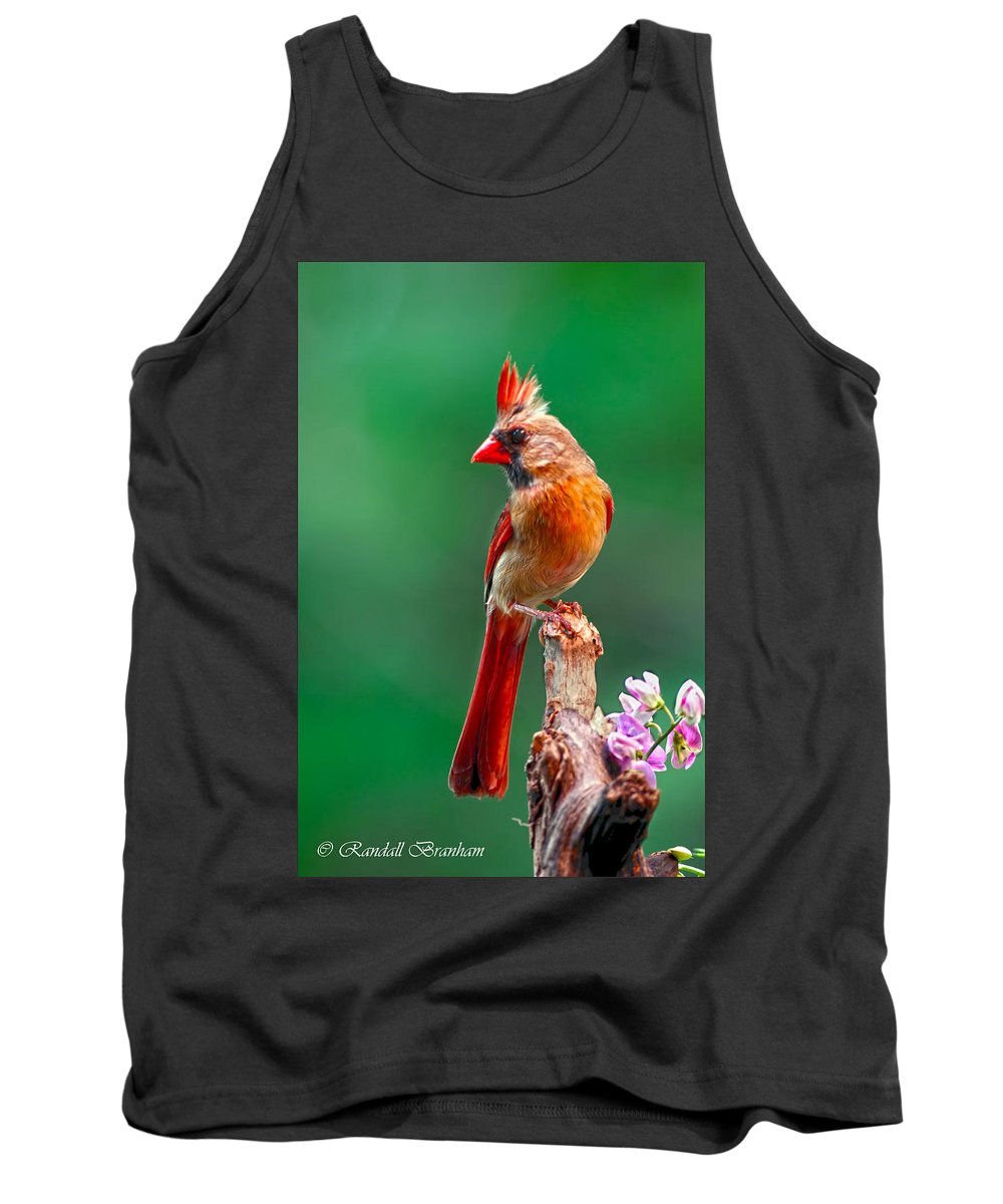 Female Posing Pretty On Snag Wrapped With Pea Vine Tank Top featuring the photograph Female Cardinal Posing Pretty by Randall Branham