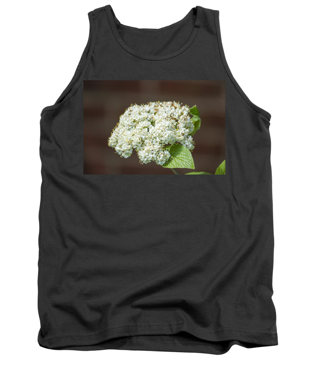 Flowers Tank Top featuring the photograph Flower In The Spotlight by Jason Huffman
