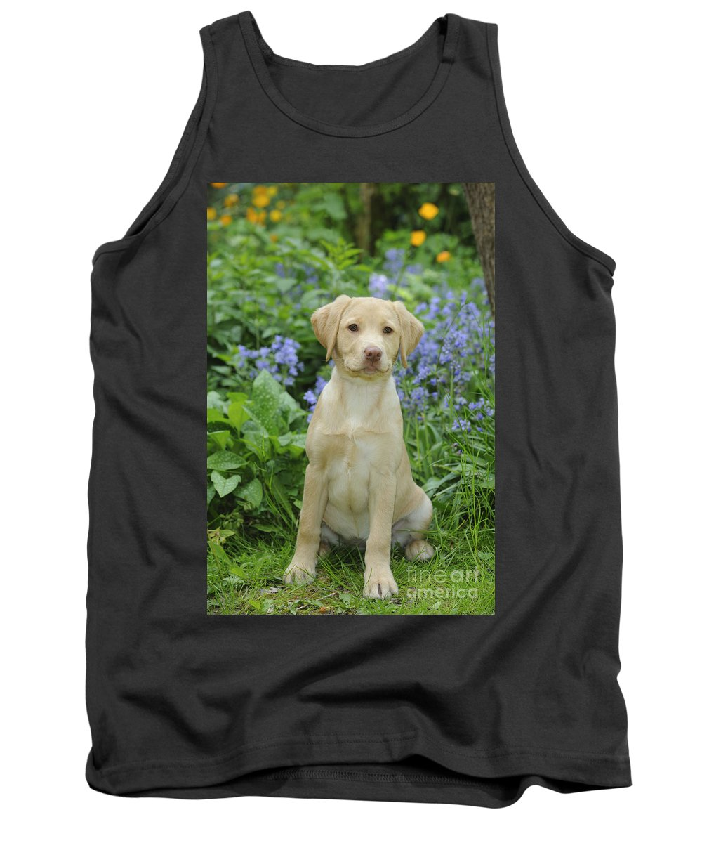 Fox Red Labrador Tank Top featuring the photograph Fox Red Labrador by John Daniels