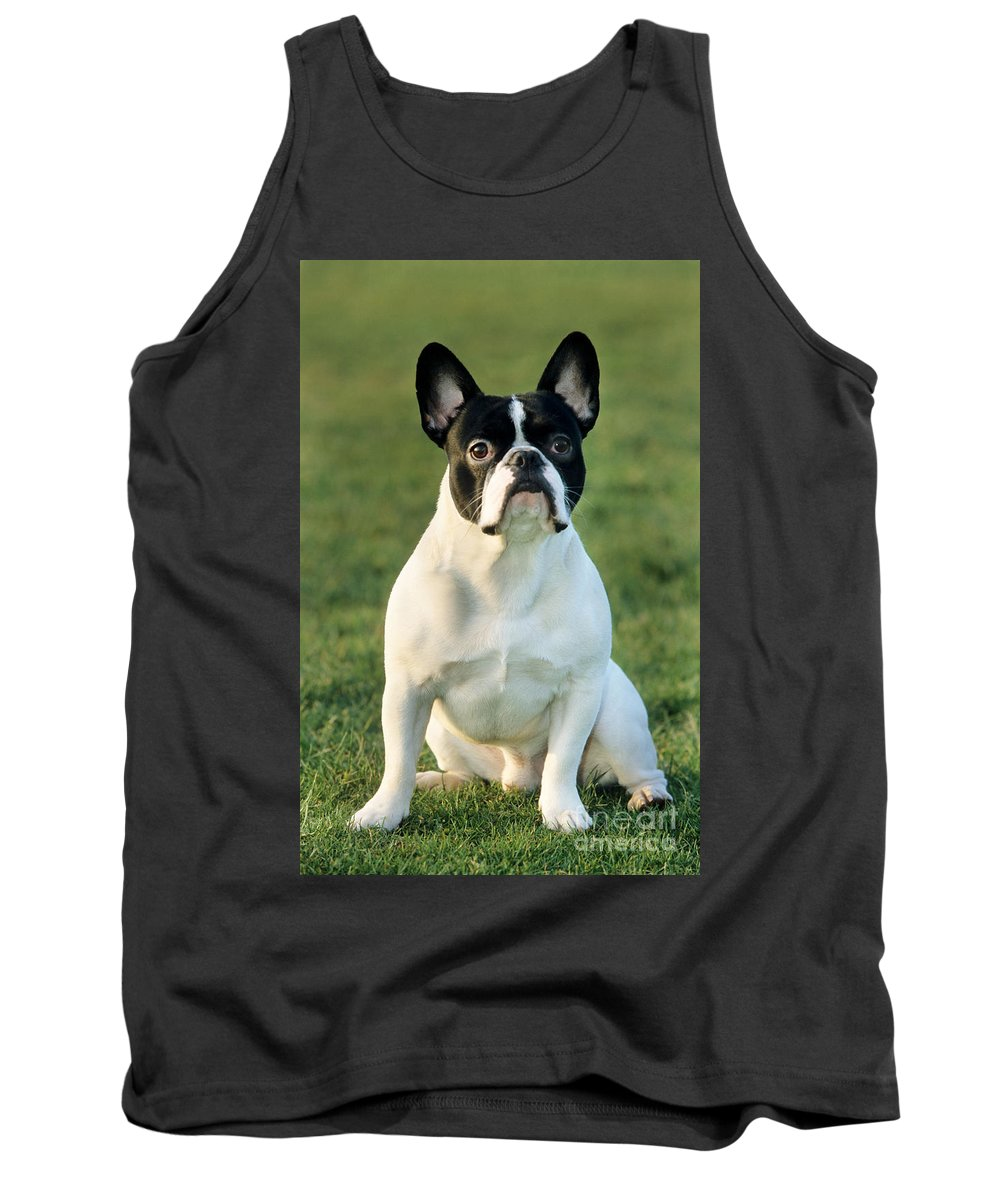 French Bulldog Tank Top featuring the photograph French Bulldog by Johan De Meester